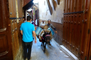 Donkey transportation in the Medina. The Firm's next area of specialization!