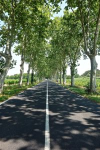 On the road to Carcesonne
