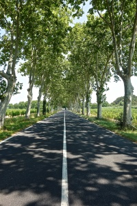 Then, we will drive down a lot of roads that mirror this one to find our home in the southwest of France.