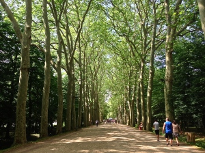 "Here is what we are talking about when we say ""tree lined street"". These are awesome!"