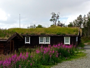 Saw many of these types of roofs along the way when crossing Norway from Oslo to Bergen.