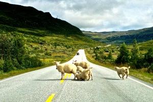 Then we had a road block!