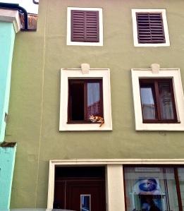 Kitty on a ledge (third story) said Hello to us