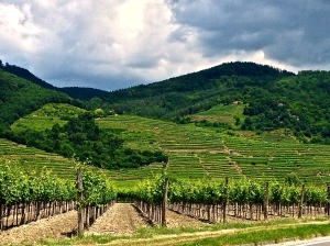 Fields of Durnstein