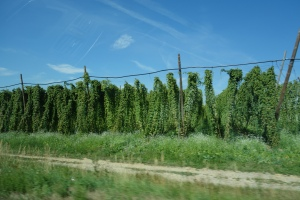 Norm's picture of hops on our 160 kph !!
