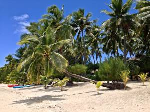 Rita's favorite tree on our beach in Aitutaki!