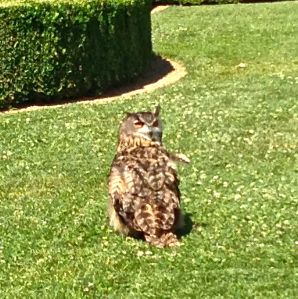 "Or is this my Owl???? We yelled his name, ""Owl"" and he turned around for me to take this picture!"