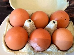 See feather in egg carton? Those are really fresh eggs!