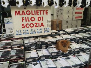 I don't read Italian, but I think the sign says the dog is for sale at the Greve market.