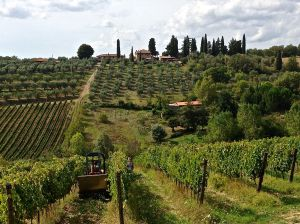 Small tractor and people hand picking the grapes.
